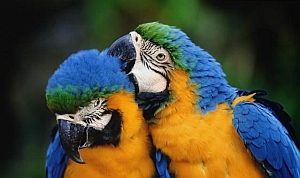 macaws-small